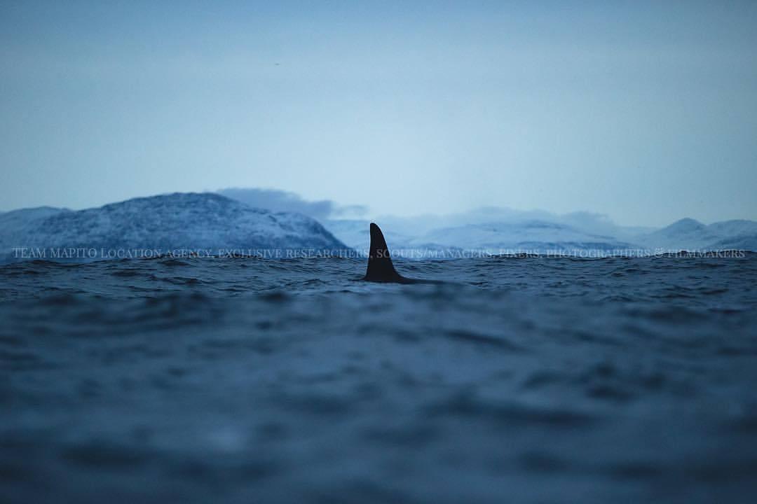Orca MAPITO